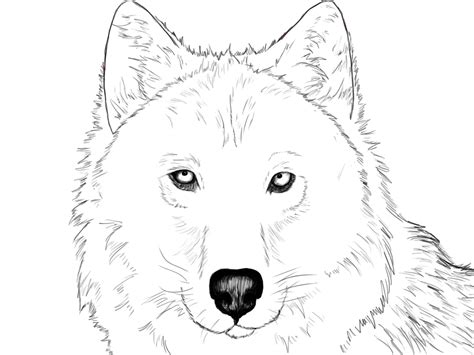 Drawing Wolf by How To Draw A Wolf Draw Central