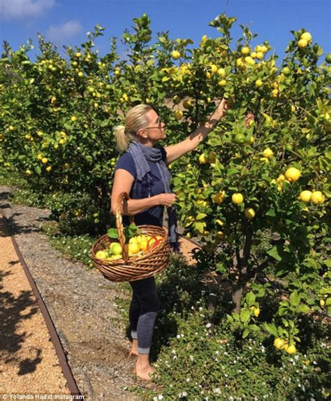 Yolanda Foster Detox by Yolanda Hadid Announces She S Back To The Master Cleanse