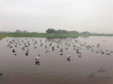attelage canard hutte chasse comment mettre des coquilles d oies 224 l eau le