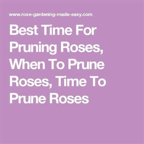 17 best ideas about pruning roses on pinterest rose bush care roses garden and growing roses