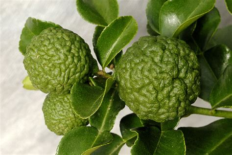 Thai Kitchen Design kaffir lime leaves information substitutions and where to