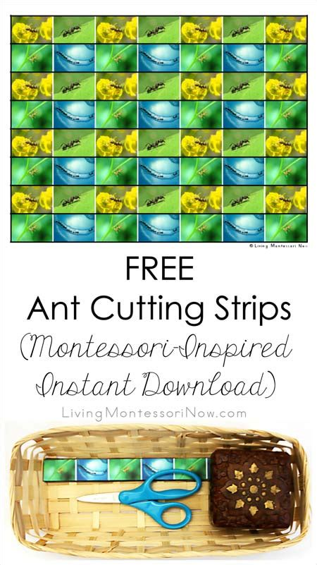 printable montessori cutting strips free ant cutting strips montessori inspired instant