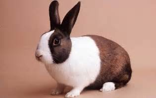 are rabbits blind pet subjects rabbits allergic to cats and guide
