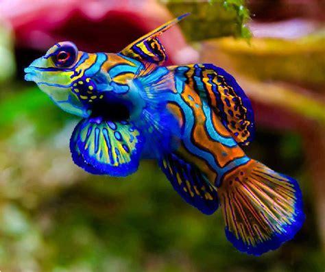 Pakan Ikan Louhan Paling Bagus ragam ikan hias yang bagus dipelihara di akuarium aneka