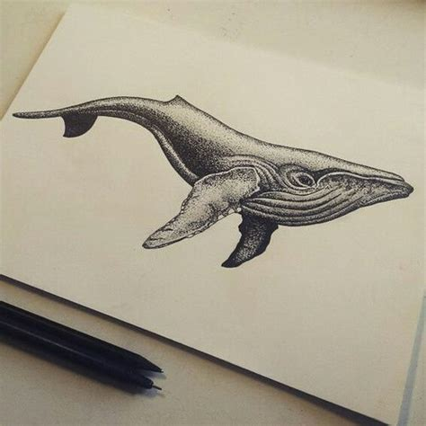 humpback whale tattoo 47 best whale images on whale tattoos