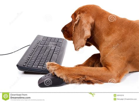 puppy keyboard cocker spaniel using mouse and keyboard royalty free stock image image