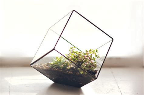 handmade geometric terrariums from cinderwood