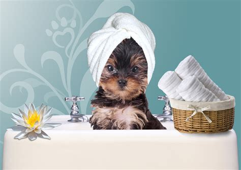 happy puppy pet spa image gallery pet salon