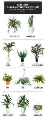 easy plants best 25 plants ideas on plants indoor house