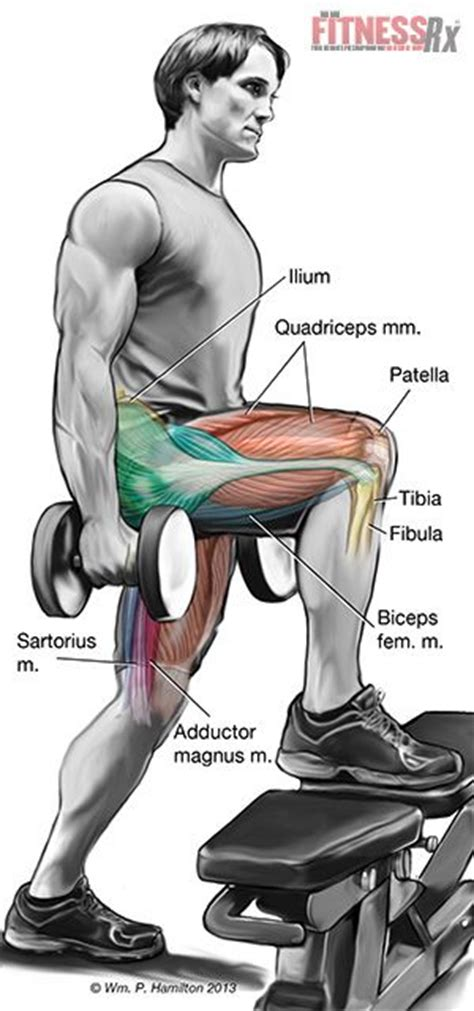muscle media bench 30 best images about fitness articles and nasm info on