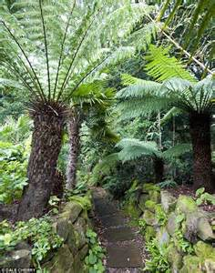 fern garden garden pinterest