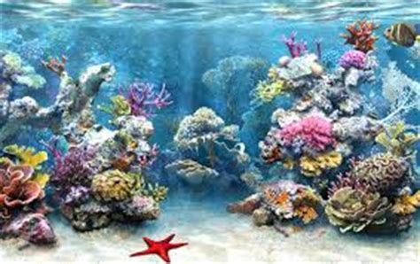Coral Reef Research Paper by Coral Reef Research Papers On The Characteristics Of This Marine