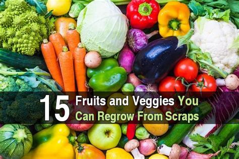 vegetables you can regrow 15 fruits and veggies you can regrow from scraps
