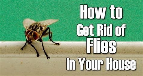 kill house flies how to get rid of fruit flies in house naturally home
