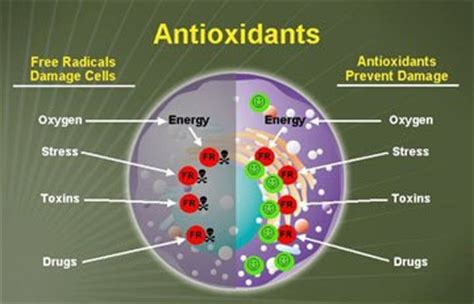 Do Antioxidants Help With The Prevention Against Aging by 187 The Anti Oxidant Paradox And Its Implications For