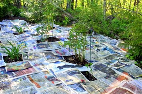 how to keep weeds out of flower beds how i smother weeds with newspaper