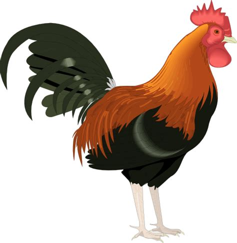 printable rooster images free to use public domain rooster clip art