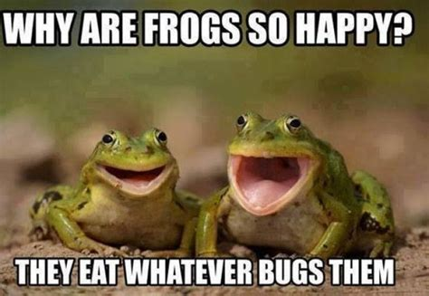 Funny Frog Meme - happy memes image memes at relatably com