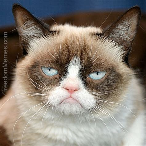 Make Your Own Grumpy Cat Meme - create your own freedom meme