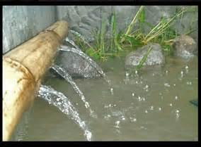 Bibit Wader belajar budidaya ikan wader kali web gado gado