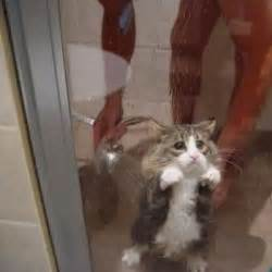 katze dusche sad cat trapped in shower collegehumor post
