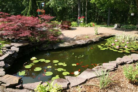 fish for backyard pond 37 backyard pond ideas designs pictures