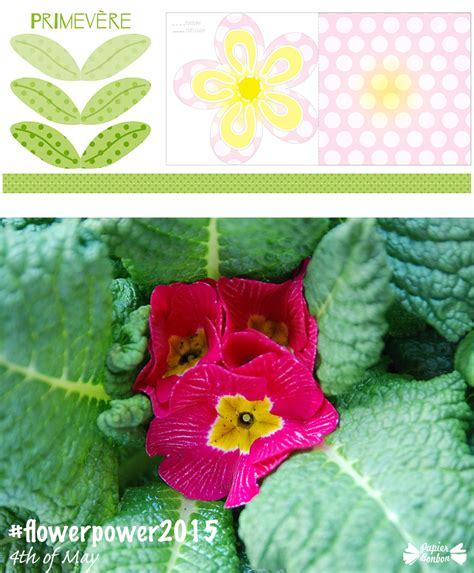 printable may flowers flower printable photo blog event flowerpower2015