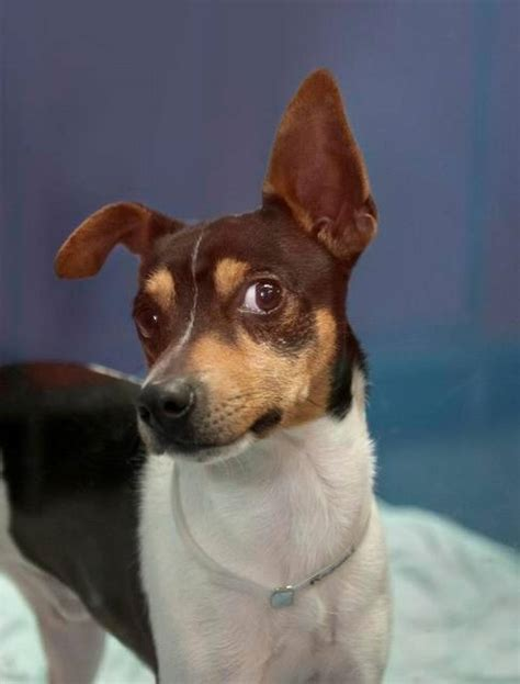 wayside waifs dogs wayside waifs offers half adoption special on selected pets the kansas city