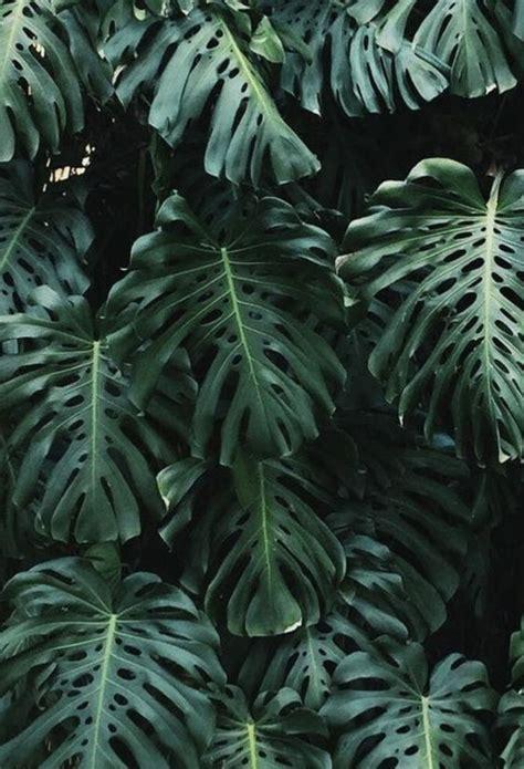 tropical palm leaves plantspo plants tropical
