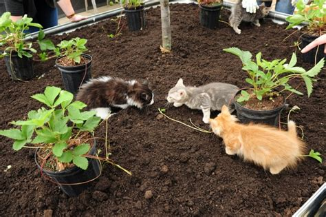 cat garden cat playgrounds are now a thing at least at the toronto