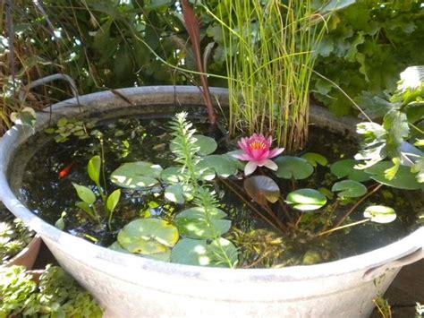 vasi per ninfee fiore di loto piante acquatiche come curare il fiore