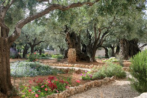 Garden Of Gethsemane Images by The 2017 Prayer Challenge Selected Scriptures Dhefc