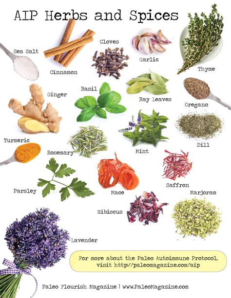 spices plants list www imgkid com the image kid has it