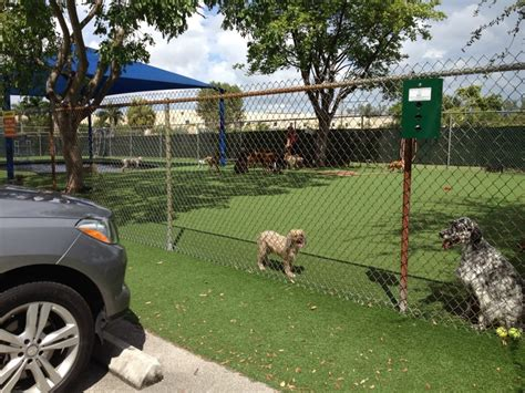 puppy daycare near me pompano pet lodge doggie day care pet boarding pet sitting 900 nw 31st ave
