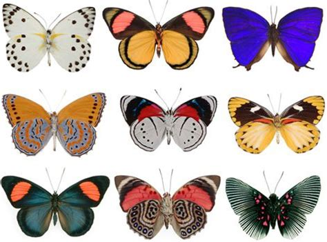 patterns in nature butterflies pinterest the world s catalog of ideas