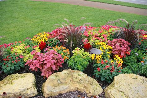 flowers for garden beds outcropping stones and annual planting bed in lakeville pahl s market apple valley mn