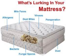 dust mite treatment mattress cleaning carpet cleaning