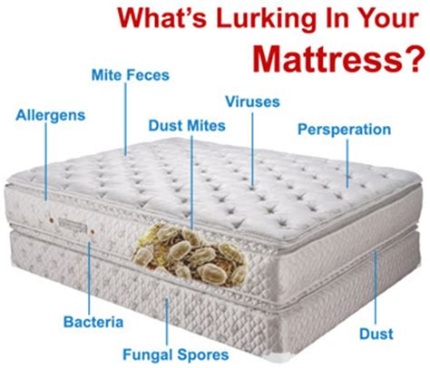 What Do You Clean A Mattress With Urine On It by Mattress Cleaning And Sanitation Mattress Cleaning Ottawa