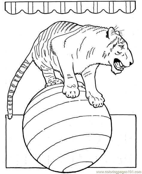 coloring pages of circus animals coloring pages circus tiger animals gt circus animals