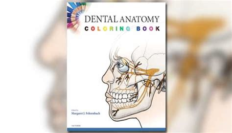 dental anatomy coloring book pdf dental anatomy coloring book dental anatomy coloring