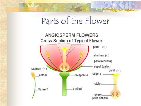 flower characteristics ppt video online download