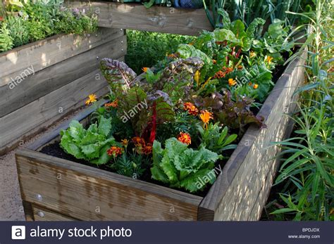 vegetable beds small urban vegetable garden in enclosed raised beds stock