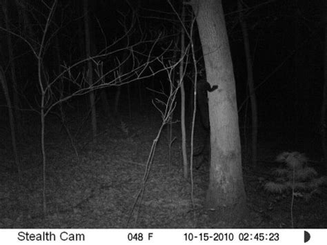 weird things » blog archive » the 21 best trail cam images
