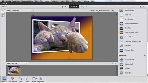 out of bounds tutorial photoshop cs5 fur tography tutorial out of bounds in photoshop elements