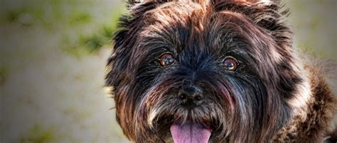 dhpp puppy vaccine vaccination recommendations mill veterinary service