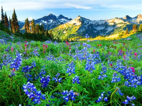 mountain wildflowers mountains nature background