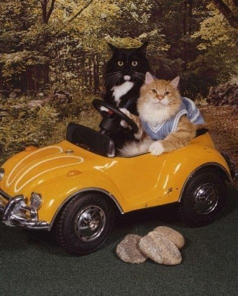 Kat Auto by Driving A Car Funnies Pinterest Cars Sweater Vests