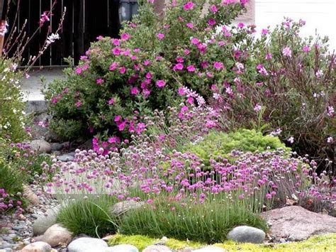 mix this with the other california plants mix with other drought tolerant