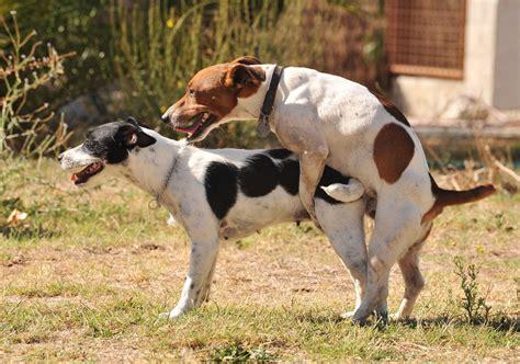 poppen im garten la conducta de monta en los perros siente a tu perro