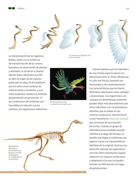 libro de ciencias naturales 6 grado 2015 2016 online libro ciencias 6 grado newhairstylesformen2014 com